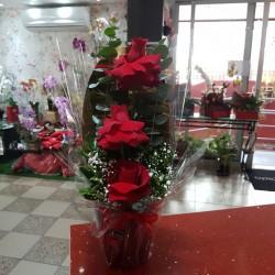 Cover glamour com 3 rosas vermelhas abertas