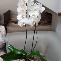 Orquídeas a partir de R$ 200,00